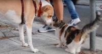 何故か野良猫たちに愛される犬。猫がどんどんやってくるもんだから、飼い主たちは野良猫の保護活動を開始した。