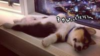 眠くなったら眠ればいいと思うよ。どこでもスヤピ~!な動物たちの寝姿を見て睡眠不足を疑似解消するの会
