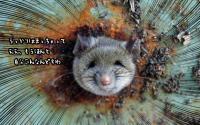 ほんともう勘弁してください。ゴミ箱を漁っていたネズミ、頭が穴にはさまり超困り顔(アメリカ)