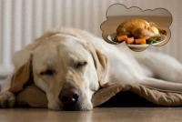 ペットの犬や猫はどんな夢をみているのだろう?そもそも夢を見るのだろうか?(ハーバード大研究)
