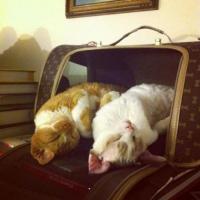 シンクロ率高すぎ感覚?どっちがどっち?猫と猫による猫のためのフュージョン画像