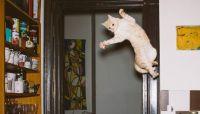 宙に舞うその姿が美しすぎて怪しすぎて・・・猫たちがジャンプするその瞬間をとらえたジャンピング猫画像集