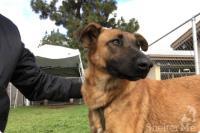 もう飼えない。犬を手放しシェルターに預けた飼い主が、別の犬を譲り受けにやってきた事実が物議をかもす(アメリカ)