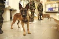 プーチンに新たな仲間が加わった。ロシア特殊部隊に配備される3匹のクローン犬「ベルジアン・シェパード」が公開される。