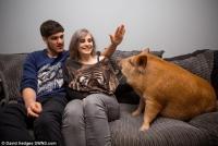ミニブタなのにミニじゃないし!ソファでパスタを食べながらゾンビ映画を鑑賞する女王ブタのいる風景