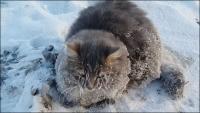 氷点下35度。あまりの寒さに凍りついてしまった猫の救出物語。最後はハッピーエンドが待っていた(ロシア)