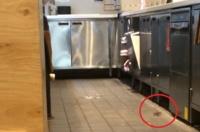 マクドナルドに猫が必要な理由がわかる動画