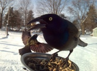 庭に設置した鳥の餌を食べにくる鳥たちがあまりにもかわいかったので接写してみた
