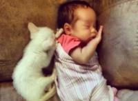 生れおちたその日から猫に慕われる赤ちゃんがいた。キャット・ウィスパラーと呼ばれる少女と猫の記録写真