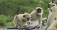 サルはその死を悲しみ、プレーリードッグは仲間として情愛を示す。本物そっくりに作られた観察用ロボットに対する野生動物たちの反応に心がきゅんきゅん