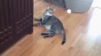 あまりにもグデネコすぎた。猫にピンポン玉を投げた。こうなった・・・