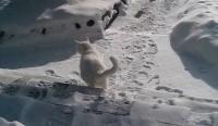 いいから外出せや。氷点下30度の日、猫の要求に応じて外に出したらこうなった。