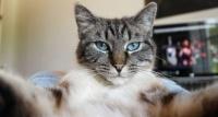 猫もセルフィー。猫用の自撮りアプリ「Candid Catmera」で猫のナチュラルな姿が思いのままに撮影できるぞ!