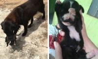 母性炸裂。メス犬がゴミ箱からが必死で救い出したのは、見ず知らずの小さな子犬たちだった(ブラジル)