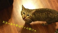 いや、うち猫飼ってないんだけど…いつのまにか家の中に猫たちのいる風景