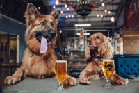新たに犬を飼うと育犬休暇がもらえる会社がある(アメリカ)