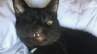 隻眼の海賊猫ウェスリーさん、インスタグラムでその魅力を大公開中