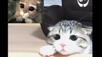 実写版『長靴を履いた猫』のオーディションが行われていたようだ。勝者はなんと日本在住の人気猫!