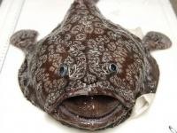 人をも殺せる殺傷力を持つ水中に潜む10の魚リスト