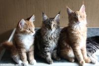 うちの猫はどれかにゃ?猫の性格は5つのタイプに分類できる(英研究)