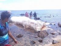 これはいったい??フィリピンで発見された毛むくじゃらの生き物