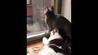 「ちょ、おま、窒息するやろ!」顔の上にお腹が降ってきた猫のジタバタ