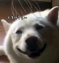 浄化タイム。しばらくは犬のとろける表情をごらんください。