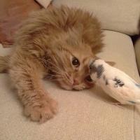 束縛されることすら心地いい。猫と小鳥のメルティーラブが止まらニャイ(ロシア)