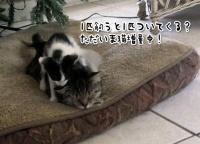 これがNNN(ねこねこネットワーク)のやり方か!飼い猫が散歩から帰ってきたら小さいのが1匹増殖してた