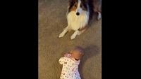 ほれ、やってみ。こうやって勢いつけて、ゴロンゴロンするんやで。と、赤ちゃんに寝返りの仕方を教える犬