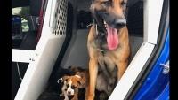 またもお手柄!強くてたくましいK9、3匹の捨て小犬を救助!
