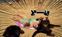 日光浴は断固阻止する。確固たる意志で飼い主女性の日光浴を妨害する犬