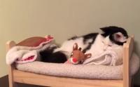 一人で寝られるもん。自分のベッドで眠る猫