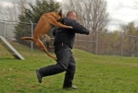 アメリカ海軍特殊部隊SEALsが伝授「犬に襲われたときの対処法」