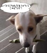 犬の恩返し。いつも食べ物をくれる女性に必ずささやかなプレゼントを持ってくる子犬(タイ)