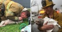 火事に巻き込まれ意識不明の重体となっていた犬に人工呼吸をし、無事に助け出した消防士(アメリカ)