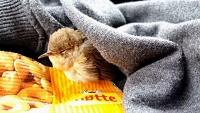 心も身体も温かくなる。車の屋根に挟まれた小さな小鳥の救助物語