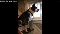 「う~う~あお~ん(すまぬが帰ってくれないか)」郵便屋さん嫌いな犬の反応が飼い主さんにも大受け