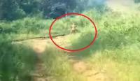 こ、このランナウェイする小さきものは?バイカーたちが遭遇した小型で棒をもった謎の生物(インドネシア)