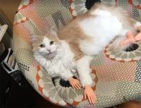 猫と和解せよ。猫に関する14のトリビア