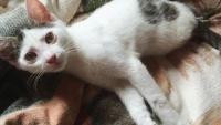 生まれながらにして二本足の子猫、愛ある家族の元もうすぐ1才に。