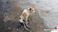 よくがんばったね!交通事故で足が麻痺した犬が、もう一度歩けるようになるまで