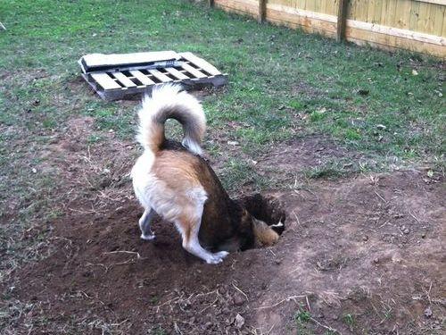犬がせっせと穴を掘り始めたので...
