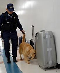 <成田空港>爆発物探知犬の訓練、初公開 テロ対策強化
