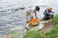 <諏訪湖>過去最大、ワカサギ大量死 全滅の可能性も