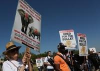 <アフリカゾウ>11万頭減…過去10年間 象牙目的の密猟