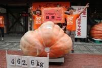 <巨大カボチャ大会>日本一は462.6キロ 歴代6番目