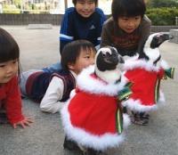 <ペンギン>サンタ姿で「家庭訪問」 子どもたち歓迎 山口