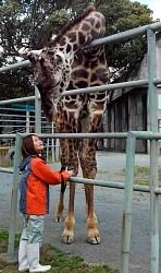 <熊本市動植物園>土日祝日限定で部分開園へ