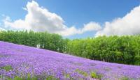 「北海道の夏は涼しい」はほんと? 道民が教える北海道の夏事情【学生記者】